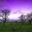 Fairytale sky on Walkhampton Common, Dartmoor National Park by DualAspect