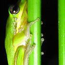 frog at night by Belinda Cottee