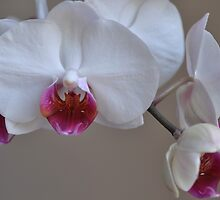 My Orchid. by Lana Howe
