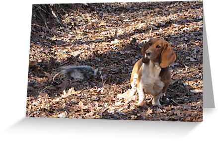 Gracie Feeling Sorry For The Possum by Misty Lackey