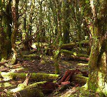 Green forest undergrowth - Tasmania by Leigh Rust