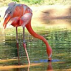 Pink Flamingo Yard Decorations by amercnwmn