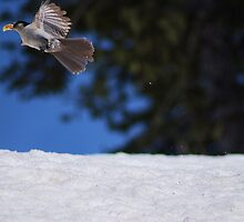 Fly Away by Tori Snow