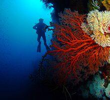 Red Fan, Christmas Island, Australia by Sean Elliott