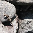 Anole Lizard Habitat by JeffeeArt4u