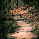 The Path by Christopher R. Watts