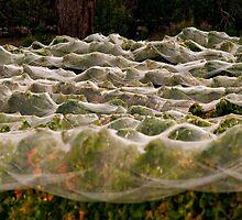 Vineyard Nets Bindi by Victor Pugatschew