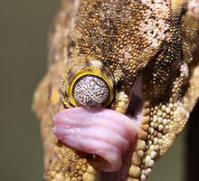 New Caledonian Gecko by Steve Bullock