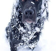Are you fed up of the snow yet? by Sandra O'Connor