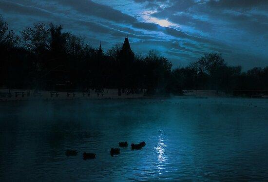Moonlight silhouettes by Béla Török