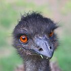 09-135 ~ Emu to you too! by djyoriginals