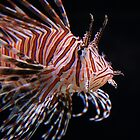 Lion Fish by Gene Praag