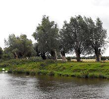 Waving willows by Agnieszka Jarecka