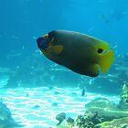 fish tank by KiwigirlKara