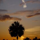 Florida Palm Sunset by Christina Spiegeland