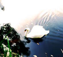 Glide by Anne  McGinn