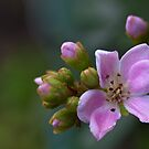 Flower by Samuel Gundry