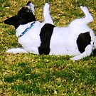 Edward loved to roll at the Park by EdsMum