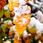 Snow Covered Leaf - Winter's Tattered Canvas by RollZLX