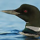 Common Loon portrait by Greg Schneider