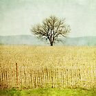 lone tree by wishcraft