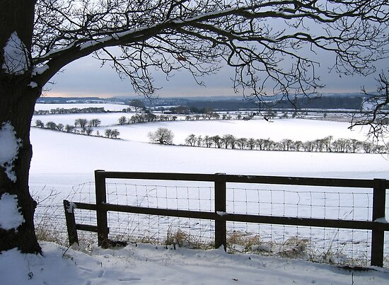 The Stillness and Starkness of a White Winter by hjaynefoster