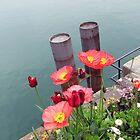 Flowers of Lindau by enzo