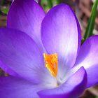 The awakening of Spring by hjaynefoster