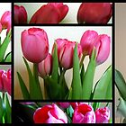 Tulips Stain Glass (204 views so far) by Debbie Meyers