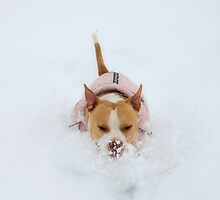 Snow Dog by Vendla