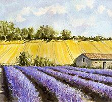 Lavender Field by FranEvans