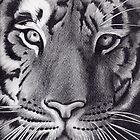 'Tiger - Up Close & Personal' by Dawn Jones Art