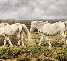 Camargue Horses by jean-louis bouzou