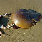 The Crab Dance by Christina Spiegeland