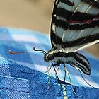 What Style, Swallowtail by NatureGreeting Cards ccwri