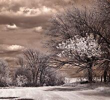 Farm Land by Rene Hales