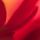 Tulip by Stas Medvedev