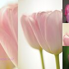 Tulips Symphonie by Rosy Kueng