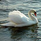 Blue-Eyed Swan by Christina Spiegeland