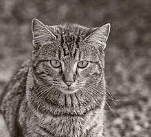 Stray Cat by Brandon Batie