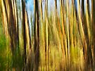Eucalyptus forest in the morning light - Corsica by Patrick Morand