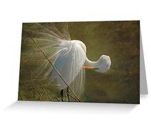 Avery Island Egrets--Preening Time 2 Greeting Card