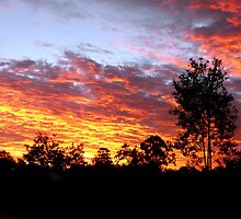 Sunset, Redland Bay, Qld, Australia by Margaret  Hyde