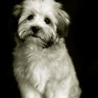 Bailey Two by SueGPhotography