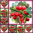 Red Berries Collage by BlueMoonRose