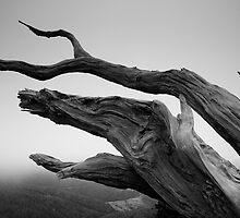 The Fallen by Michael Treloar