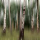 panographic gum tree blur by Greg Carrick