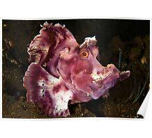 Paddleflap Scorpionfish Poster