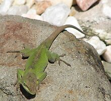 Big Green Beautiful-Anole Carolinensis Lizard by JeffeeArt4u