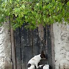 Dogs hiding from the rain in the Yucatan by hebeluna